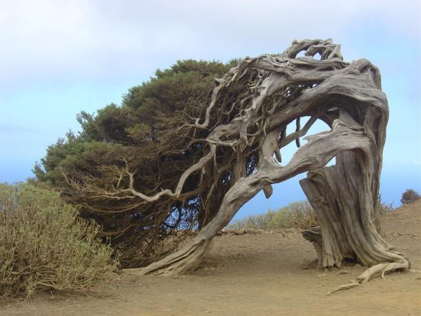 اغرب الاشجار في العالم 1005.jpg