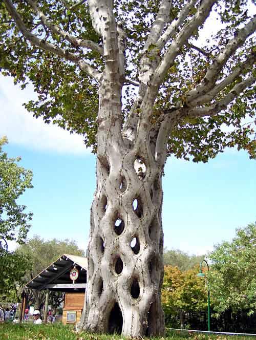 اغرب الاشجار في العالم 1006.jpg