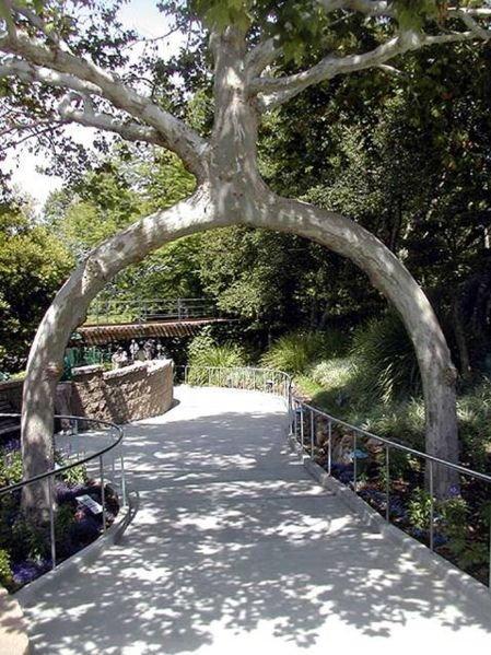 اغرب الاشجار في العالم 1007.jpg