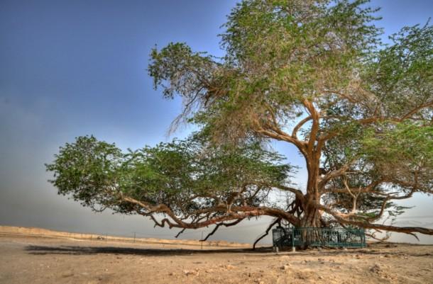 اغرب الاشجار في العالم 1010.jpg