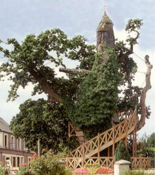 اغرب الاشجار في العالم 1011.jpg