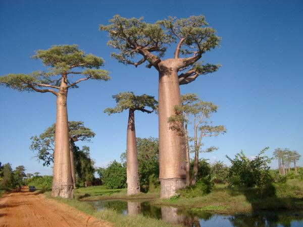 اغرب الاشجار في العالم 1014.jpg