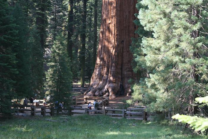 اغرب الاشجار في العالم 1015.jpg