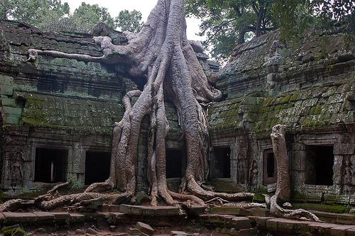 اغرب الاشجار في العالم 1016.jpg