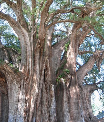 اغرب الاشجار في العالم 1019.jpg