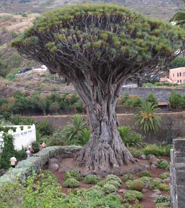 اغرب الاشجار في العالم 1020.jpg
